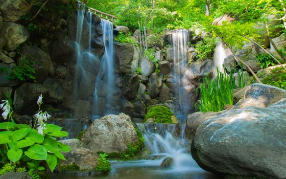 Фото бесплатно природа, растения, река