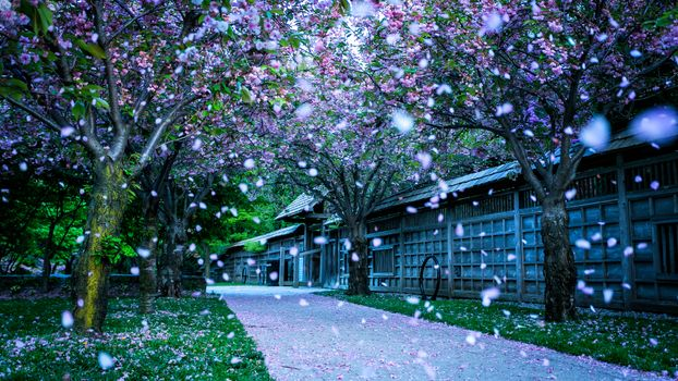 Фото бесплатно парк, тропинка, тротуар