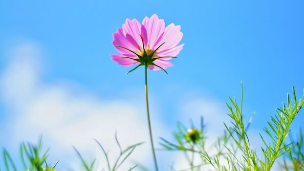Photo free pink flower, clouds, leaves
