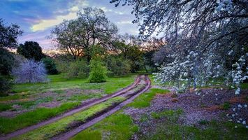 Бесплатные фото закат,сад,парк,дорога,деревья,пейзазаж