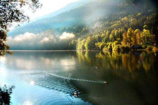 Заставки осень, утки, туман