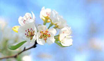 Фото бесплатно цветок, стебель растения, ветвь