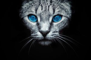 Фото бесплатно кошка, морда, голубые глаза