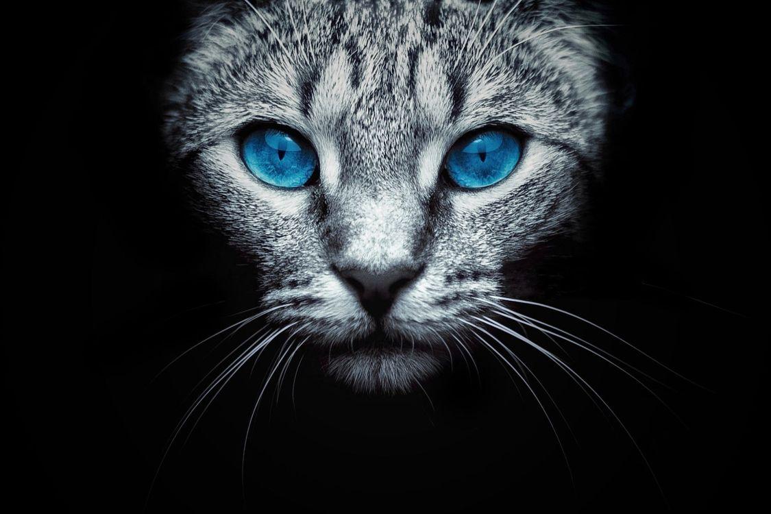 Фото бесплатно кошка, морда, голубые глаза - на рабочий стол