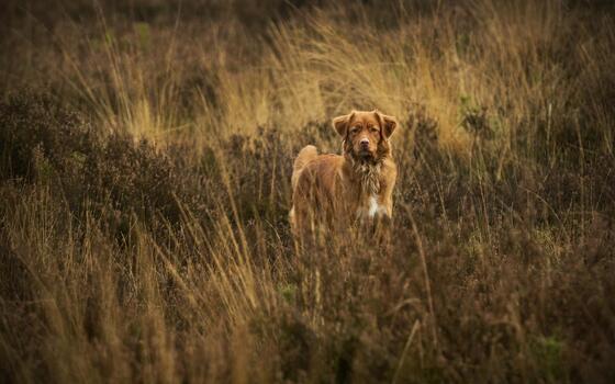 Photo free dogs, grass, fauna