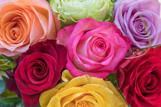 Заставки роза, цветочный фон, цветы