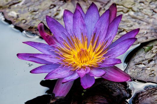 Заставки водоём,цветок,цветы,водяная лилия,водяные лилии,флора