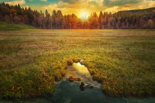 Photo free duck, forest, field