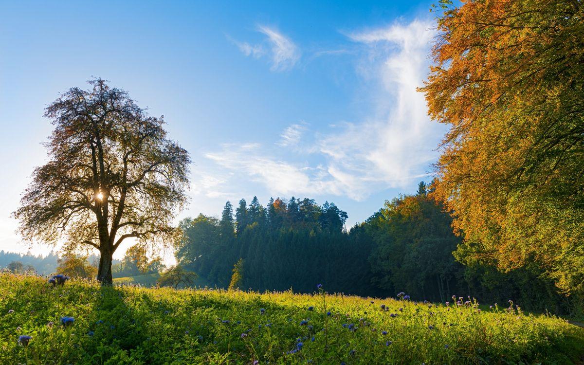 Фото солнечный свет Швейцария поле - бесплатные картинки на Fonwall