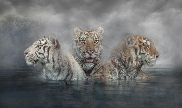 Фото бесплатно три, арт, тигры