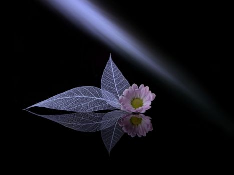 Photo free flower, leaf, light beam