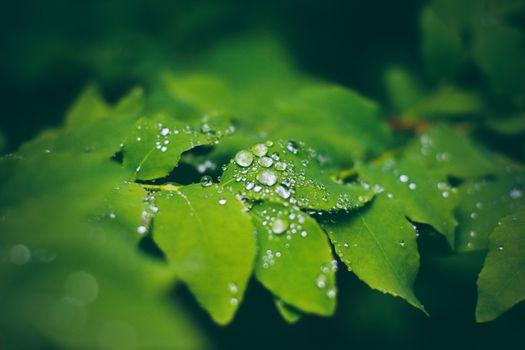 Фото бесплатно листья, макро, капли воды