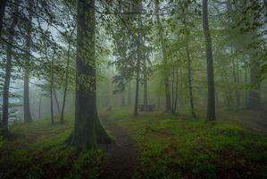 Бесплатные фото лес, деревья, парк, туман, пейзаж