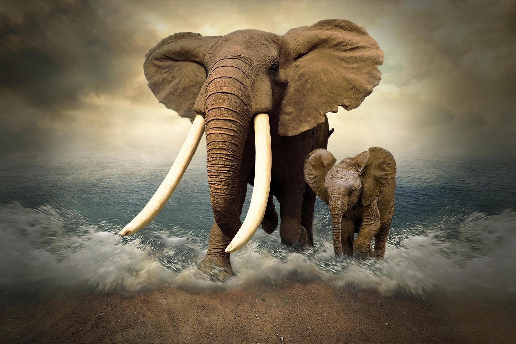 Обои море, берег, слоны, art
