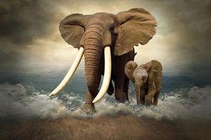 Фото бесплатно море, берег, слоны