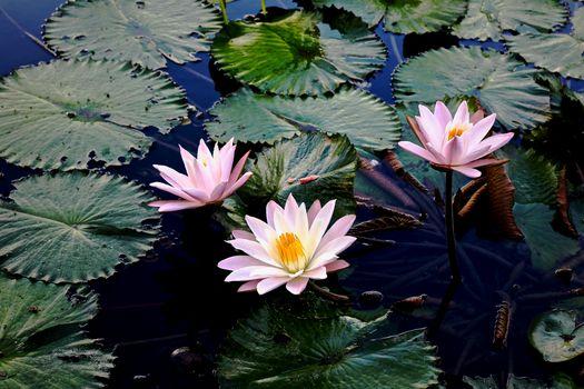 Photo free beautiful flower, body of water, beautiful flowers