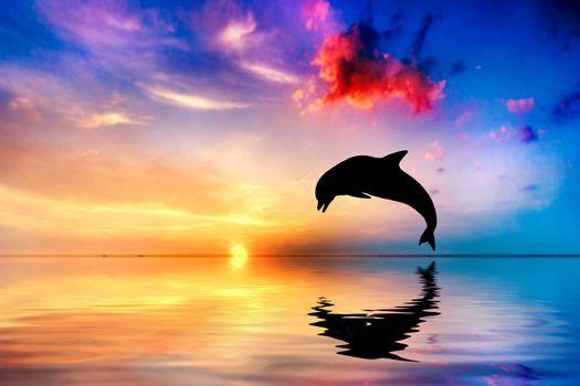 Фото бесплатно дельфин, океан, прыгать