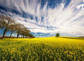 Бесплатные фото поле,цветы,деревья,небо,облака,природа,пейзаж