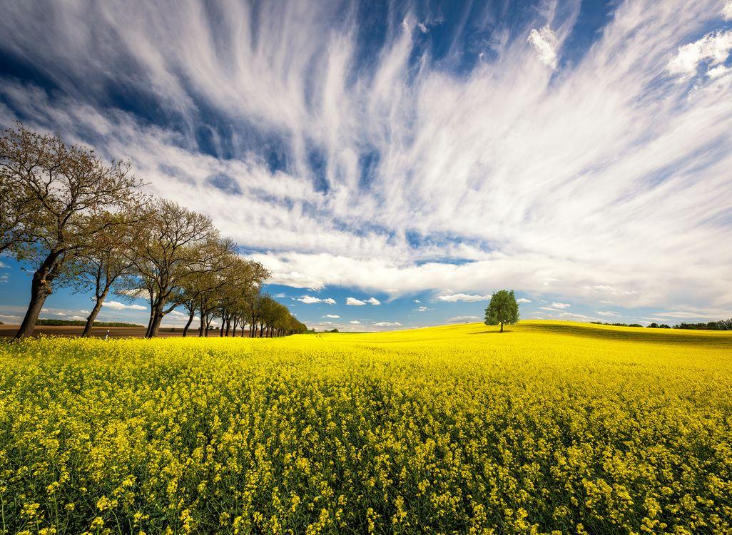 Фото бесплатно цветы, облака, природа - на рабочий стол