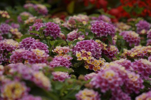 Фото бесплатно цветок, розовый цвет, много