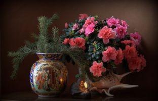 Бесплатные фото натюрморт,стол,ваза,цветы,ракушка,свеча,азалия