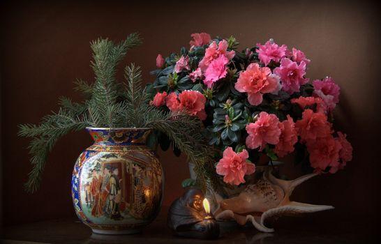Photo free shell, azalea, flowers