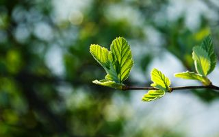 Фото бесплатно крошечные листья, бутон, размытый фон