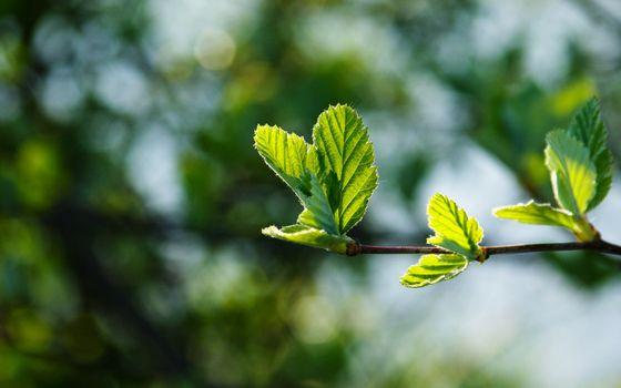 Photo free tiny leaves, bud, blurred background