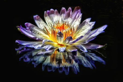 Фото бесплатно водоём, цветок, водяная лилия