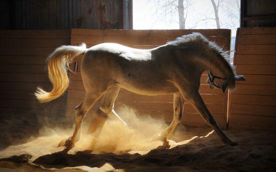 Заставки очаровательная, лошадь, солнечные лучи