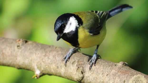Фото бесплатно ветвь, глаза, птицы