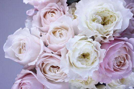 Бесплатные фото цветы,пионы,букет