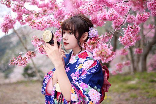Photo free female, cherry blossom, kimono