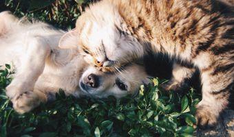 Фото бесплатно трава, собака, животное