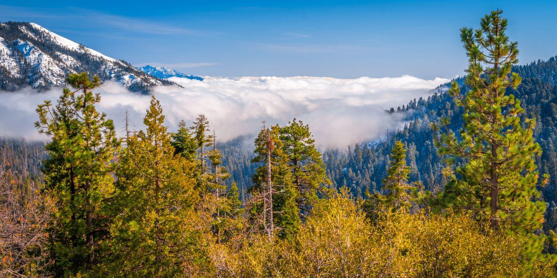 Фото деревья горы Калифорния - бесплатные картинки на Fonwall