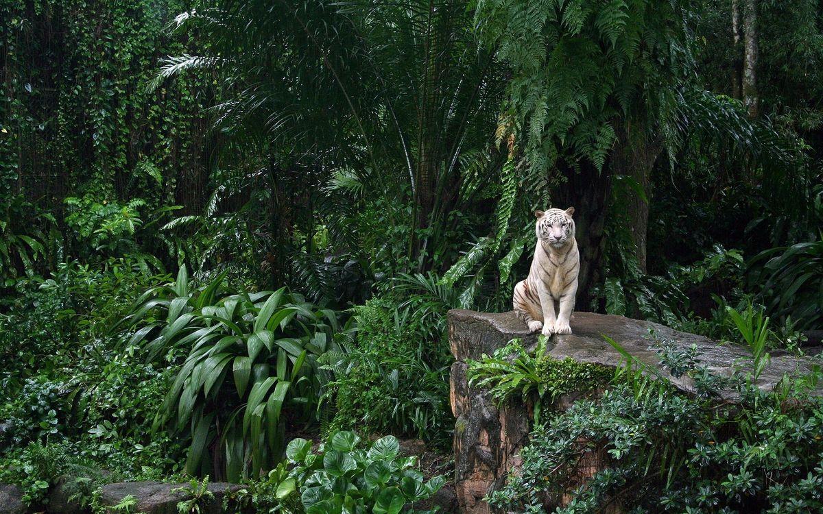 Фото бесплатно белый тигр, лес, сидячий - на рабочий стол