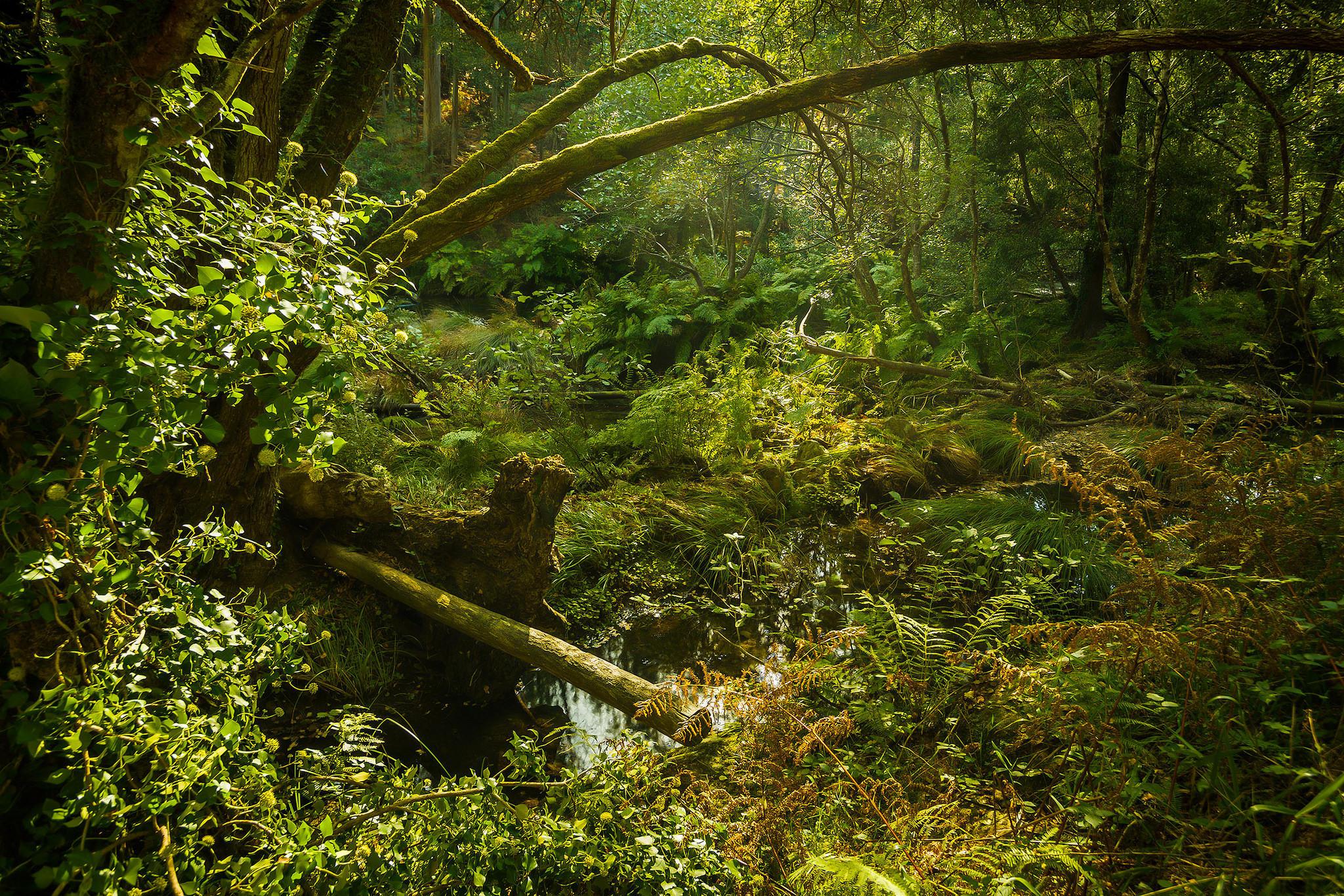 Обои лес, деревья, водоём, природа