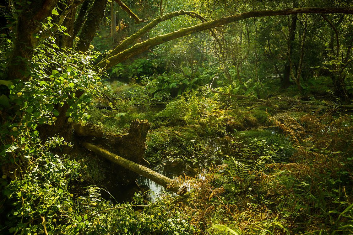 Free photo forest, trees, pond - to desktop