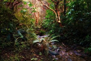 Photo free New Zealand, forest, trees