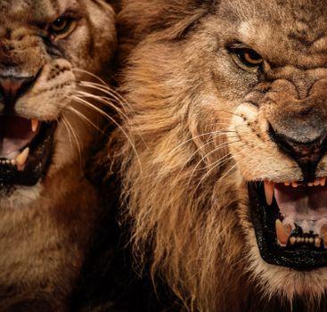 Photo free predator, fangs, big cats