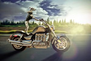 Фото бесплатно Ruff Rider, мотоцикл, собака, скорость, дорога, фотошоп, art, фантазия
