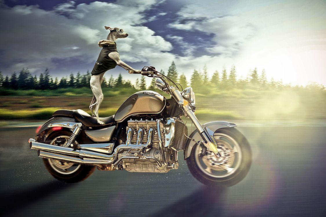 Фото бесплатно Ruff Rider, мотоцикл, собака, скорость, дорога, фотошоп, art - на рабочий стол