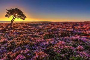 Бесплатные фото закат, поле, дерево, цветы, лаванда, пейзаж