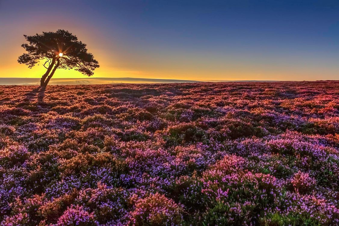 Фото бесплатно закат, поле, дерево - на рабочий стол