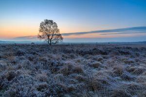 Бесплатные фото закат,поле,иней,туман,дерево,пейзаж