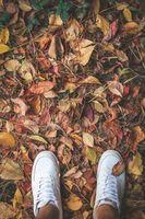 ноги, кроссовки, листва, осень, feet
