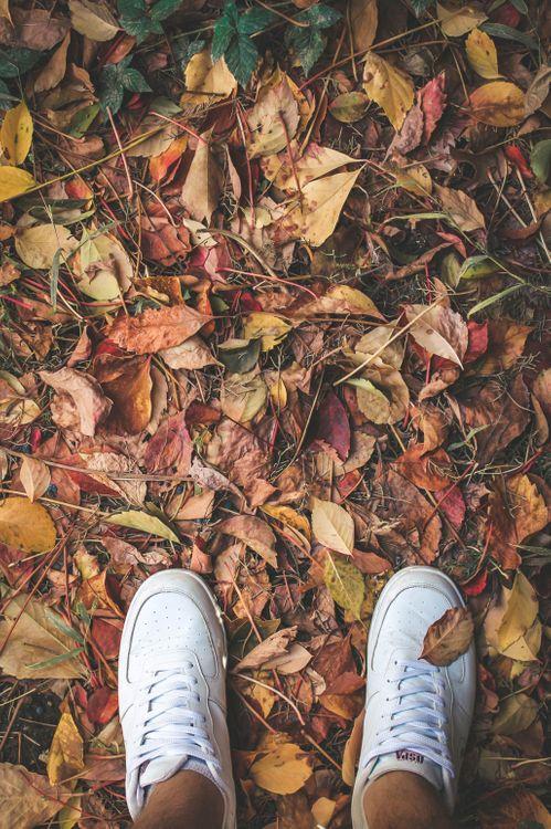 Фото бесплатно ноги, кроссовки, листва - на рабочий стол