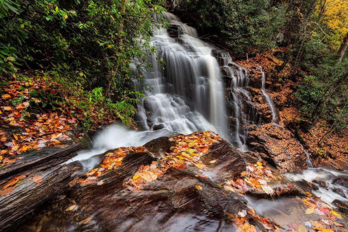 Фото бесплатно осень, лес, деревья, водопад, природа, природа
