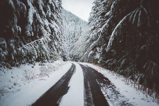 Бесплатные фото дорога,снег,деревья,зима,road,snow,trees,winter
