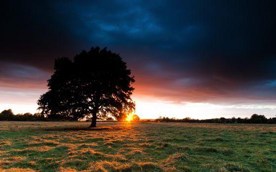 Заставки закат, одинокое дерево, поле